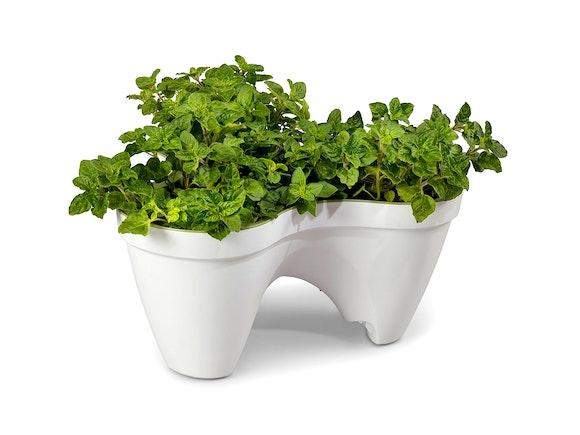 Keter Ivy Planter Stackable