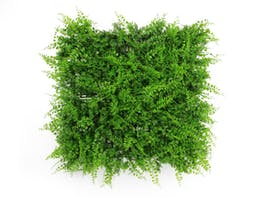Artificial Green Wall Fern Fusion 3m²