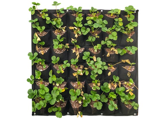 Wall Hung Planter Non-Woven 36 Pocket - 2 Pack