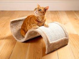 Cat Scratcher Wave