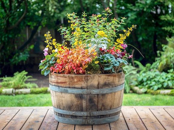 Oak Wine Barrel Half - Set of 2